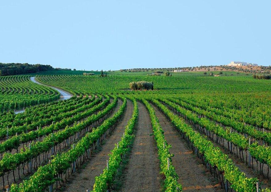 Masseria Amastuola ed il vino come fil rouge delle tue nozze in Puglia...